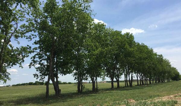 trees along future trail