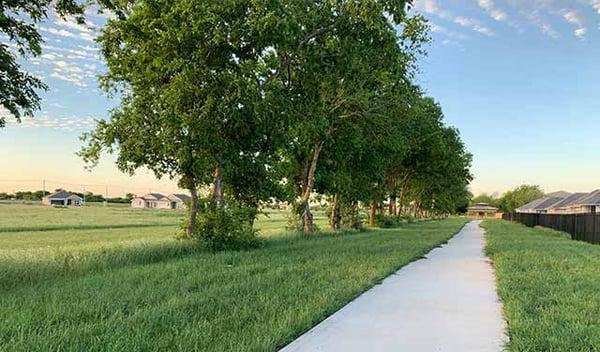 community-trail-trees