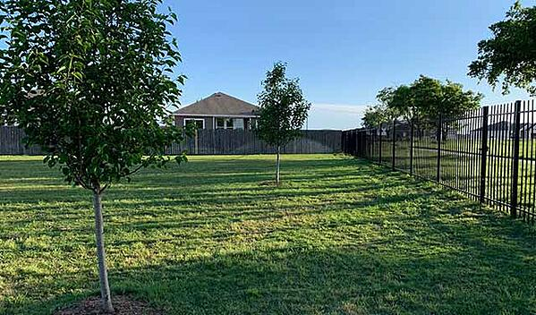 planting-trees-in-back-yard