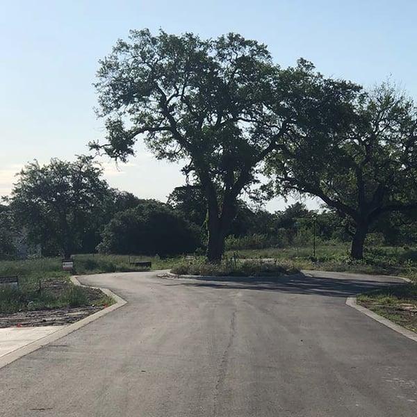 preserving-tree-during-development